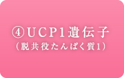 UCP1遺伝子