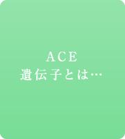 ACE遺伝子とは...